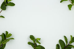 Las hojas de la menta fresca Fotografía de archivo libre de regalías