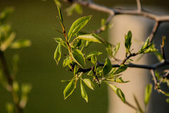 Las hojas de los árboles Imagen de archivo libre de regalías