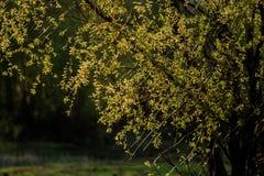 Las hojas de los árboles Foto de archivo libre de regalías