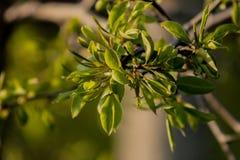 Las hojas de los árboles Fotos de archivo