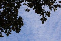 Las hojas de los árboles y del cielo arriba Fotografía de archivo