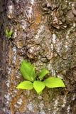 Las hojas de los jóvenes. Imagen de archivo libre de regalías