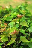 Las hojas de los jóvenes en jardín viejo imágenes de archivo libres de regalías