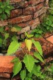 Las hojas de los jóvenes en jardín viejo imagen de archivo libre de regalías