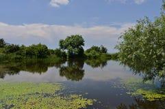 Las hojas de los lirios de agua en el lago emergen fotos de archivo