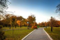 Las hojas de oro en la rama, madera del otoño con el sol irradian Foto de archivo libre de regalías