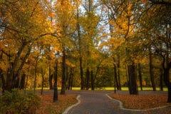 Las hojas de oro en la rama, madera del otoño con el sol irradian foto de archivo