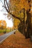 Las hojas de oro en la rama, madera del otoño con el sol irradian imagenes de archivo