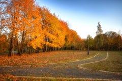 Las hojas de oro en la rama, madera del otoño con el sol irradian fotografía de archivo libre de regalías