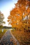Las hojas de oro en la rama, madera del otoño con el sol irradian Fotografía de archivo