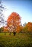 Las hojas de oro en la rama, madera del otoño con el sol irradian imagen de archivo libre de regalías