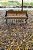 Las hojas de otoño Imagen de archivo libre de regalías