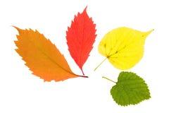 Las hojas de otoño aislaron foto de archivo libre de regalías