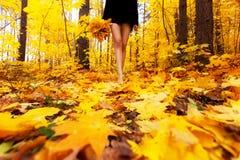 Las hojas de otoño amarillas, anaranjadas y rojas en caída hermosa parquean Gir Fotos de archivo