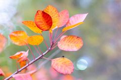 Las hojas de otoño broncean, rojo y amarillo igra Imagenes de archivo