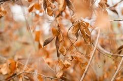 Las hojas de otoño caen abajo caída en la rama seca Fotos de archivo libres de regalías