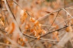 Las hojas de otoño caen abajo caída en la rama seca Fotografía de archivo