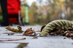 Las hojas de otoño caidas-abajo Fotos de archivo