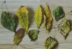 Las hojas de otoño coloridas en el agua azul fría con reflexiones del sol, oro ondulan El concepto de otoño ha venido Imágenes de archivo libres de regalías