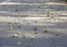 Las hojas de otoño coloridas en el agua azul fría con reflexiones del sol, oro ondulan El concepto de otoño ha venido Imagenes de archivo