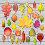 Las hojas de otoño coloridas fijaron en vector de madera del fondo Imagenes de archivo