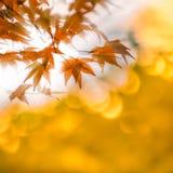Las hojas de otoño con el sol irradian, foco muy bajo Fotos de archivo libres de regalías