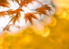Las hojas de otoño con el sol irradian, foco muy bajo Imagen de archivo libre de regalías