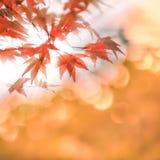 Las hojas de otoño con el sol irradian, foco muy bajo Fotografía de archivo