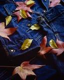 Las hojas de otoño cubren una chaqueta de la mezclilla azul foto de archivo