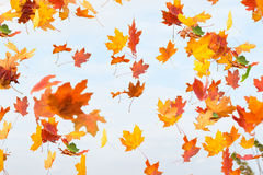 Las hojas de otoño están cayendo Foto de archivo libre de regalías