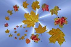 Las hojas de otoño que caen Fotos de archivo libres de regalías