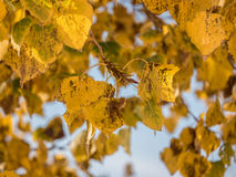 Las hojas de otoño se cierran para arriba Fotos de archivo libres de regalías