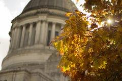 Las hojas de otoño se cierran para arriba Foto de archivo
