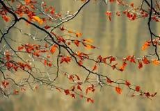 Las hojas de otoño sobre el agua Imágenes de archivo libres de regalías