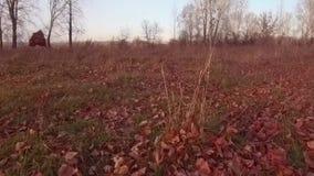 Las hojas de otoño vuelan sobre la tierra Hojas amarillas que caen en la cámara lenta metrajes