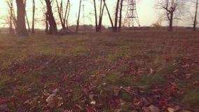 Las hojas de otoño vuelan sobre la tierra Hojas amarillas que caen en la cámara lenta almacen de metraje de vídeo
