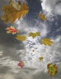 Las hojas de otoño y las gotas de agua que caen Foto de archivo libre de regalías