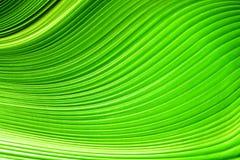 Las hojas de palma Fotos de archivo libres de regalías