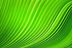Las hojas de palma Foto de archivo