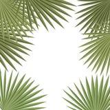 Las hojas de palma enmarcan en el fondo blanco Bandera de la planta tropical, plantilla de la tarjeta Imágenes de archivo libres de regalías