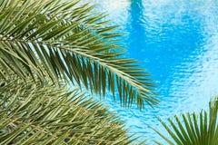 Las hojas de palma frescas en el fondo hermoso del agua potable fotografía de archivo