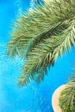 Las hojas de palma frescas en el fondo hermoso del agua potable imágenes de archivo libres de regalías