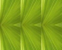 Las hojas de palma verdes Fotografía de archivo libre de regalías