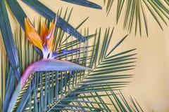 Las hojas de palma y la ave del paraíso tropicales florecen en fondo en colores pastel foto de archivo libre de regalías