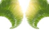 Las hojas de palmeras en la salida del sol en un fondo blanco Ilustración Foto de archivo