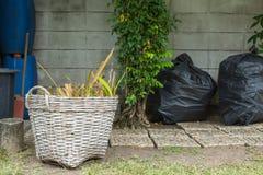Las hojas de té frescas se recogen en las cestas para la transformación posterior Fotografía de archivo libre de regalías