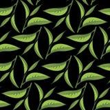 Las hojas de té modelan con el contexto negro Imagenes de archivo