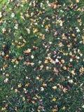 Las hojas dejan en desorden la tierra después de caer imagenes de archivo