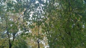 Las hojas del árbol Fotos de archivo libres de regalías