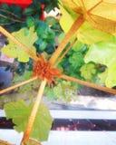 Las hojas del árbol Fotografía de archivo